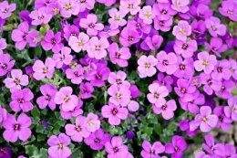 A Primavera é conhecida como estação das flores.